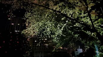20170410夜桜@花園小学校.jpg